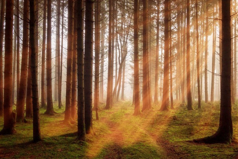 forest-3448818.jpg