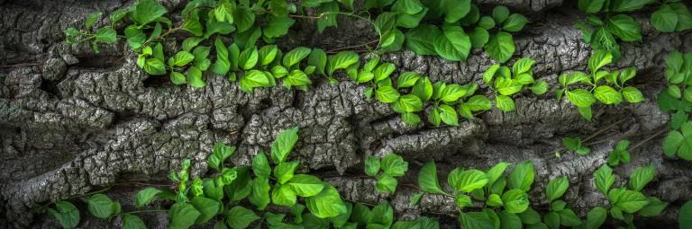 wood-1350175.jpg